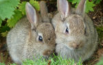 Беседа про зайца для старших дошкольников