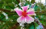 Платонов «неизвестный цветок» читать