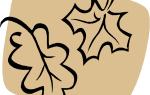 Внеурочное занятие по окружающему миру, 2-3 класс. растения луга