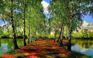 Стихи о лесе для детей 5-6-7 лет