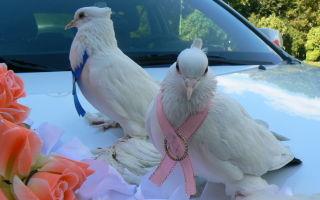 Рассказ про голубя 1-2 класс. окружающий мир