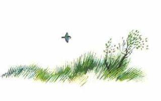 Крапивин «соринка» читать онлайн
