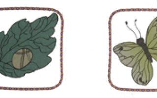 Задания для детей на тему «насекомые»
