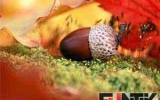 Классный час «поздняя осень», 2 класс