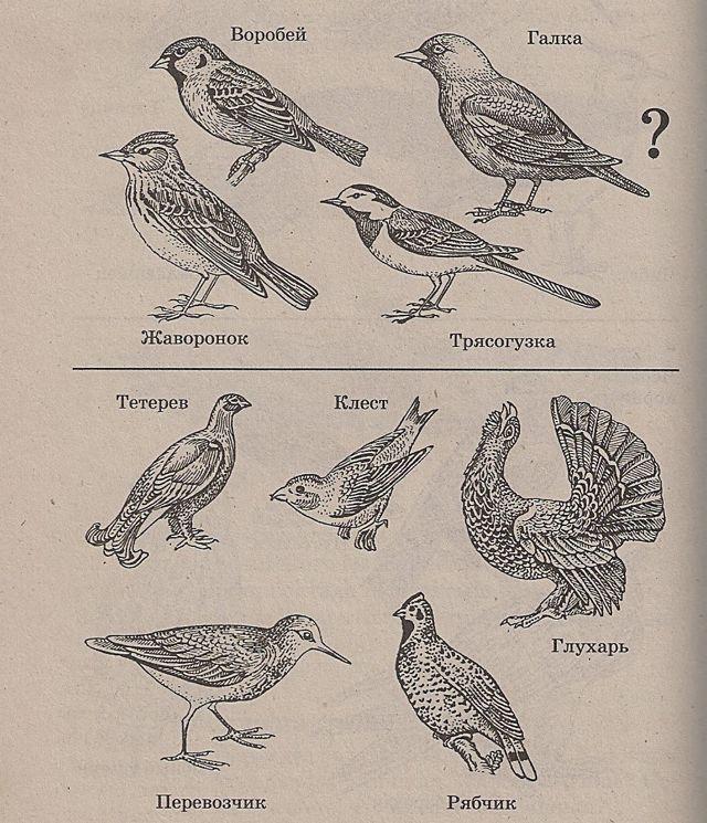 Игра соревнование на тему: Птицы, 6-7 класс