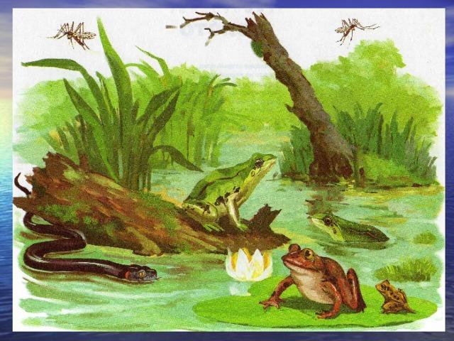 Конспект викторины о животных с ответами для детей 1 класса