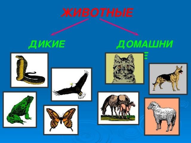 Дидактическая игра для дошкольников «В мире животных» своими руками