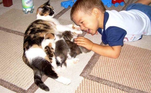 Конспект игрового занятия по теме «Домашние животные» в средней группе