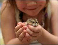 Внеклассное занятие к празднику Всемирный день защиты животных, 3-4 класс