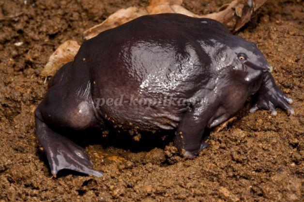 Беседа о лягушках, 2-3 класс