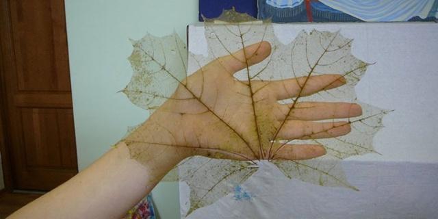 Аппликация из природного материала и бумаги для детского сада