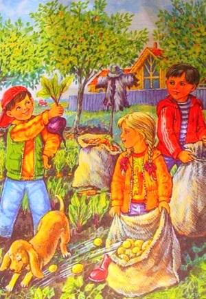 Загадки с картинками «Что растет на грядке»