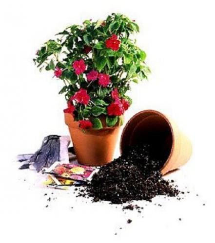 Внеклассное занятие в начальной школе «Уход за комнатными растениями»