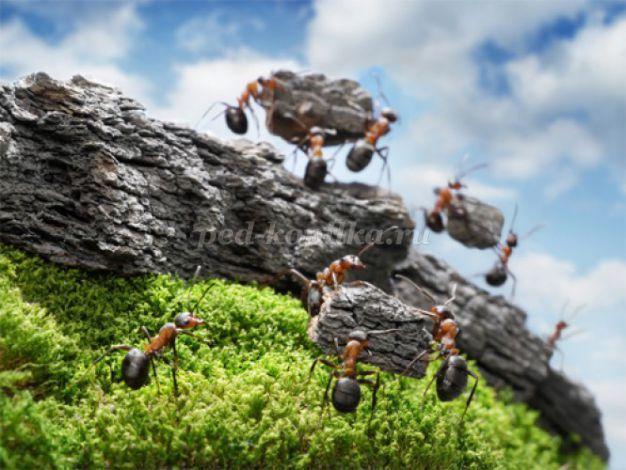 Беседа о муравьях в старшей – подготовительной группе
