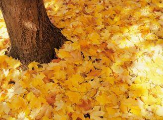 Осенние праздники в начальной школе