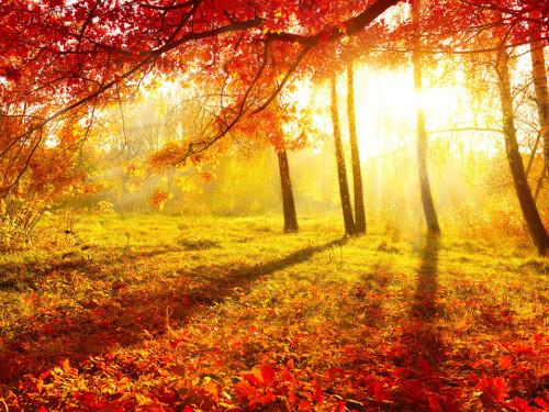 Сценарий праздника Золотая осень