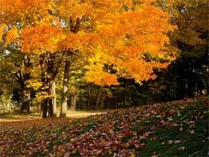 Конспект НОД во 2 младшей группе по теме: Осень