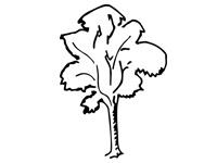 Стихи про деревья для детей 4-5 лет в детском саду