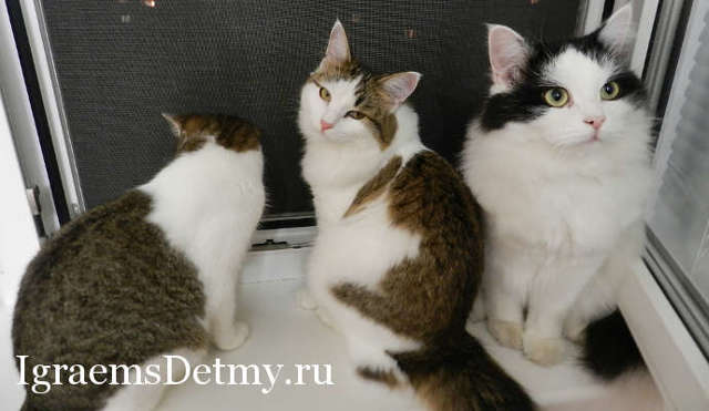 Познавательная игра о кошках для школьников, 5-6 класс