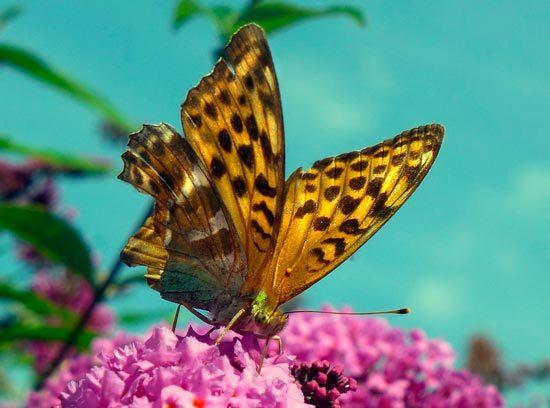 Платонов «Разноцветная бабочка» читать