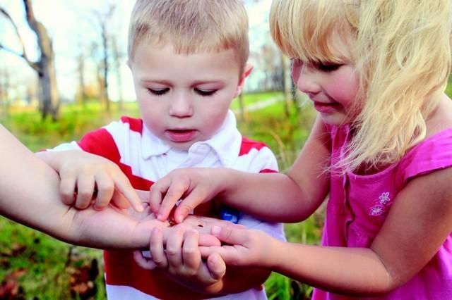 Наблюдения за живой и неживой природой в младшей группе детского сада