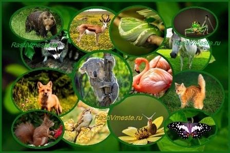 Игра викторина о животных с ответами для школьников 7 класса