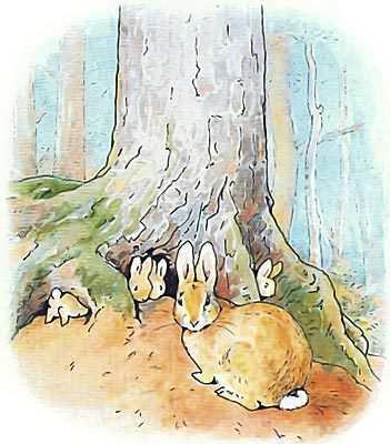 Беатрис Поттер «Питер-кролик» читать