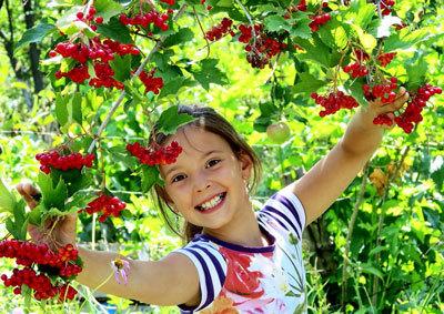 Стихи про фрукты и ягоды для детей 5-7 лет