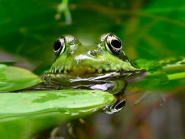 Интересные факты из жизни живой природы