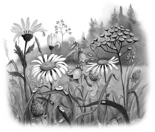 Толстой «Какая бывает роса на траве» распечатать текст
