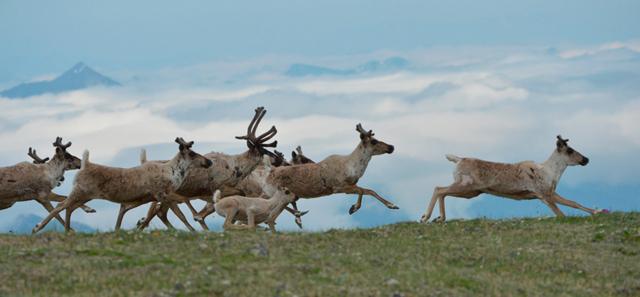 Рассказ про северного оленя, 1-2 класс. Окружающий мир