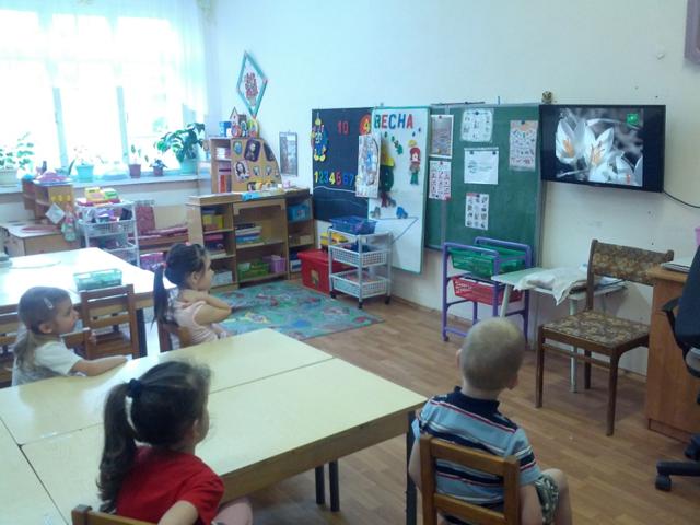 Конспект познавательного занятия по экологии на тему: Ива, 2 класс