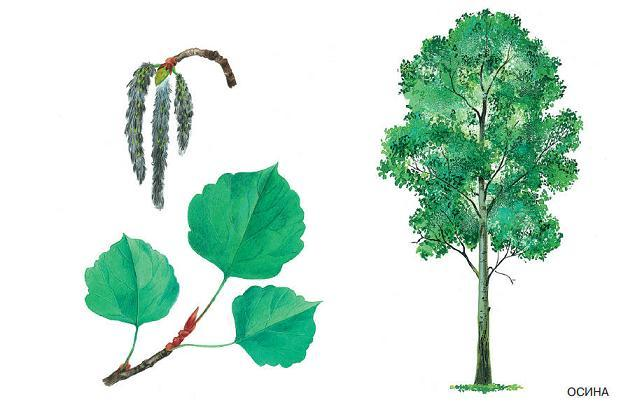 Сказка про деревья для детей дошкольников