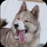 Классный час: «Собака - друг человека», 2 класс