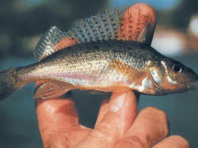 Рассказы о природе для школьников. Длинноносые рыболовы