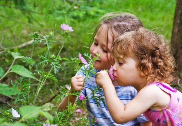 Консультация для родителей. В лес вместе с ребенком