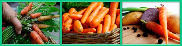 Рассказ про морковь для детей, 1-2-3 класс
