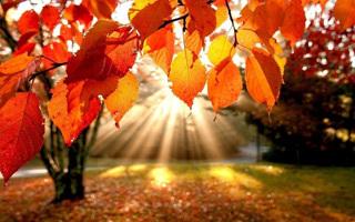 Приметы ноября для детей