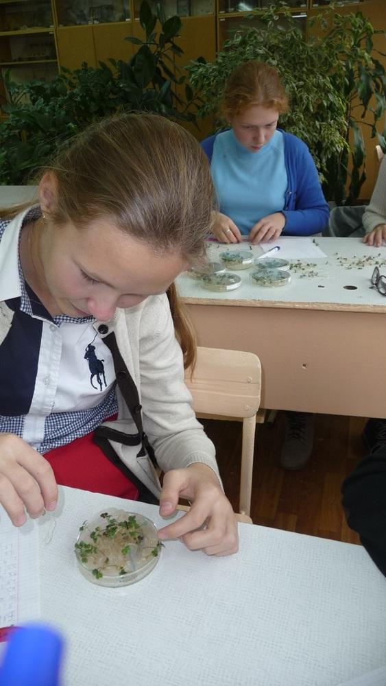 Исследовательский проект по экологии, 9-10 класс