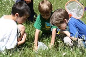 Мероприятие в летнем пришкольном лагере без подготовки