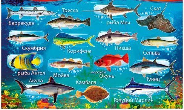 Стихи про рыб для детей 4-5-6 лет