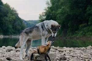 Русская народная сказка «Лиса, волк и медведь» текст читать