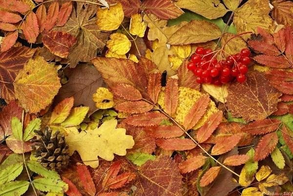 Плещеев «Осень наступила...» стихотворение 2 класс