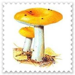 Рассказ про гриб Груздь для детей 5-8 лет