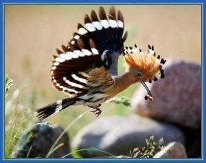Рассказ про птицу удод для детей