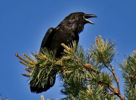 Русская народная сказка «Ворона» читать