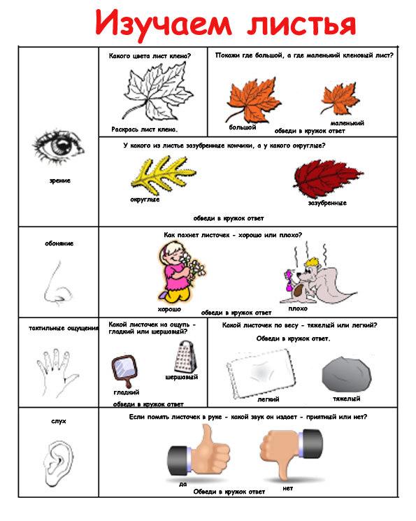 Конспект познавательного занятия на тему: Осина, 1 класс